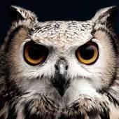 -MightyOwl-