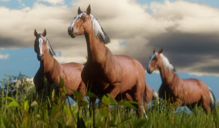 Red Dead Redemption 2 Horse Guide - Best Breed, Bonding, Stables & More