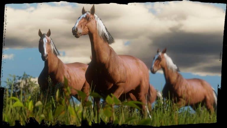 Horses & Saddles - Red Dead Redemption 2 Wiki - RDR2 org